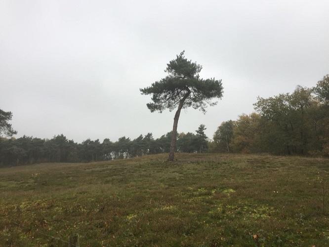 Leur tijdens wandeling van Ravenstein naar Hernen over het Roots Natuurpad