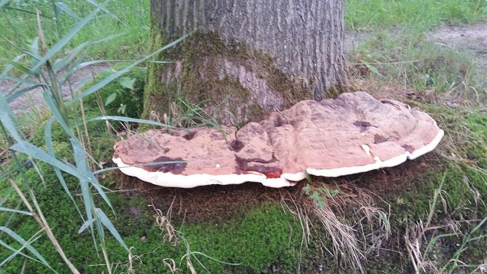 Paddestoelen langs de Biezenloop op wandeling over het Roots Natuurpad van Schijndel naar Veghel