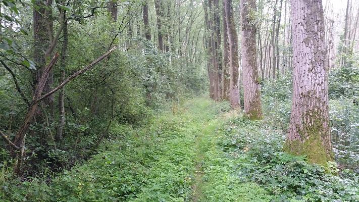 Hoog gras Wijboschbroek op wandeling over het Roots Natuurpad van Schijndel naar Veghel