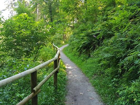 Wandelpad op wandeling van Brilon naar Olsberg tijdens wandelreis over Rothaarsteige in Sauerland in Duitsland