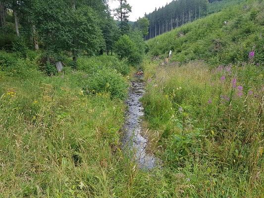 Beekje tijdens wandeling van Kahler Asten naar de Hoheleyehutte over de Rothaarsteige in Sauerland in Duitsland