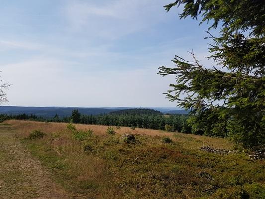 Heideveld en bos tijdens wandeling van Kahler Asten naar de Hoheleyehutte over de Rothaarsteige in Sauerland in Duitsland
