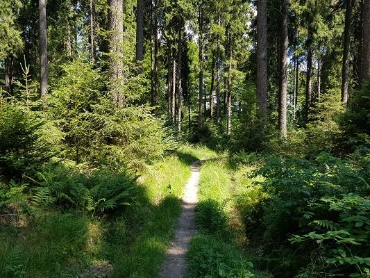 Bospad tijdens wandeling van Willingen naar Usseln op wandelreis over Rothaarsteige in Sauerland in Duitsland