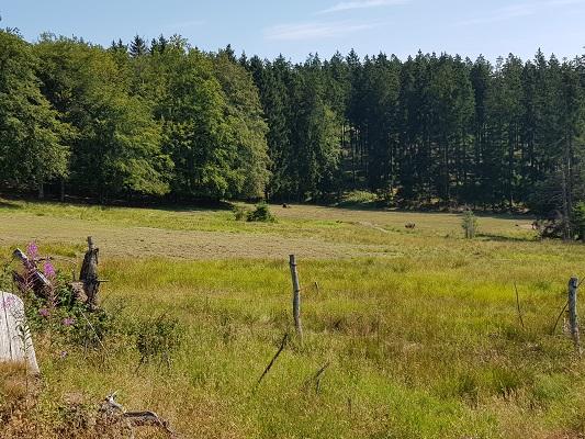 Graslanden langs bosrand tijdens wandeling door Wisentpark op wandelreis over Rothaarsteige in Sauerland in Duitsland