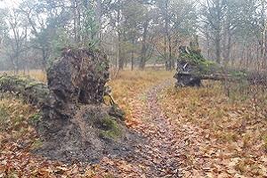 Bossen tijdens wandeling over het Scholtenpad