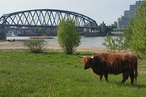 Waalsprong bij Nijmegen in wandeling over Streekpad Nijmegen