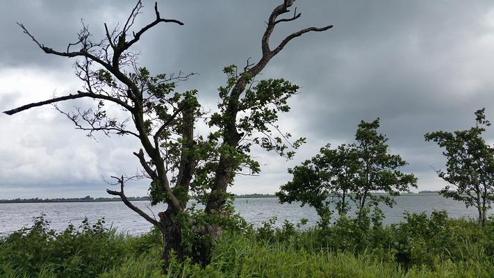 Eenzame boom tijdens wandeling op eiland Tiengemeten