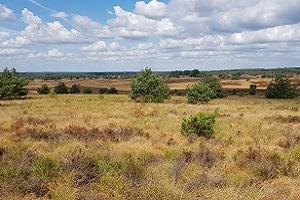 Heidegebied tijdens een wandeling over het Veluwe Zwerfpad