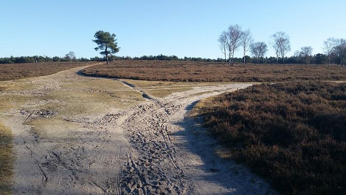 Wandelen over het Westerborkpad op de Wezepse Heide