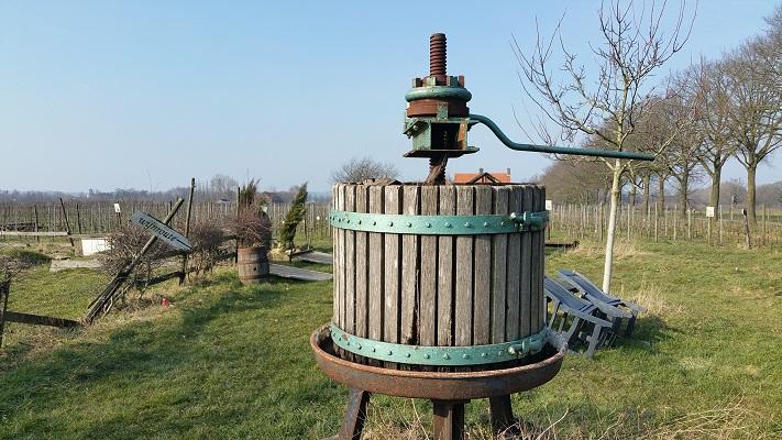 Druivenpers bij Wijngaar de Plack tijdens wijnwandeling van Wanda Catsman in Groesbeek