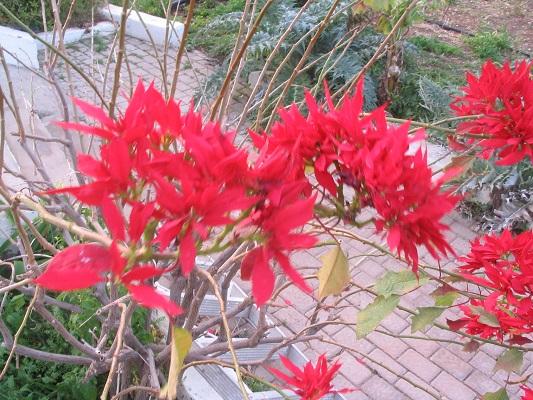 Bloeiende planten tijdens een wandelvakantie op Canarisch Eiland Gran Canaria