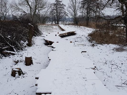 Knuppelbrug over wijstgronden tijdens IVN-wandeling Over Peelrandbreuk en wijstgronden in Uden