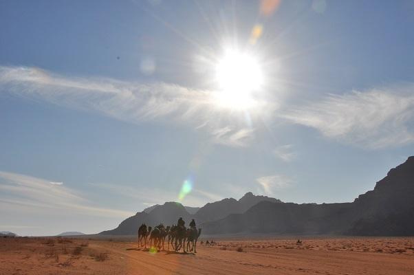 Kamelen in de zon in landschap van Wadi Rum tijdens een wandelreis van SNP door Jordanië