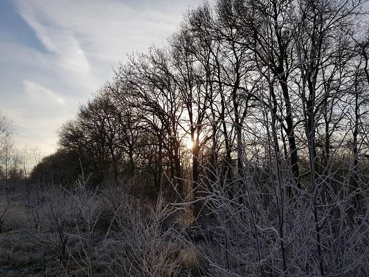 Renkumse Heide op een wandeling over Klompenpad Molenbeeksepad bij Wolfheze