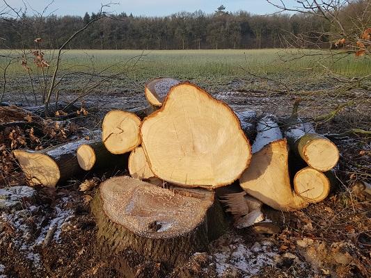 Bomenkap op de Renkumse Heide op een wandeling over Klompenpad Molenbeeksepad bij Renkum