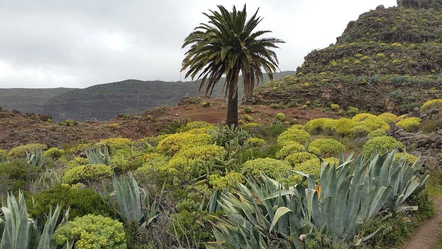 La Matanza Wandelpad hoog boven Barranco de Erque tijdens wandeling op een wandelvakantie op La Gomera op de Canarische Eilanden