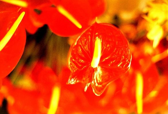 Bloempracht in Soccoridosdal op wandelvakantie op Portugees eiland bloemeneiland Madeira