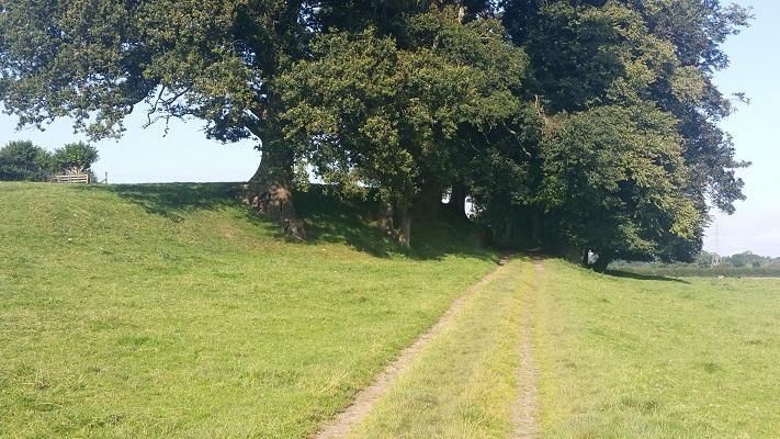 Wandelpad met eiken tijdens wandeling van Carlisle naar Bownes op wandelreis over Muur van Hadrianus in Engeland