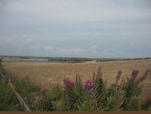 Graanvelden op een wandeling van Wallsend naar Heddon on Wall op een wandelreis over de Muur van Hadrianus in Engeland