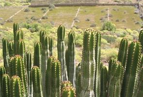 Weelderige cactussen op wandelreis naar Canarisch Eiland La Gomera