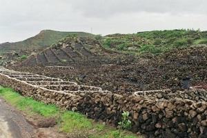 Landbouwperceeltjes tijdens wandelreis naar Canarisch Eiland Lanzarote