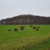 Zuiderwaterliniepad - Terheijden-Oosterhout - Wandelen van de Linie van den Hout naar de Vrachelse Heide