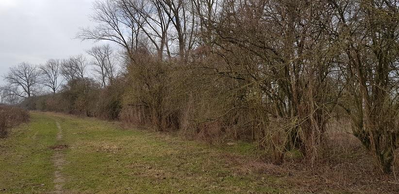 Struikpartijen en bomen op IVN-wandeling door de Millingerwaard