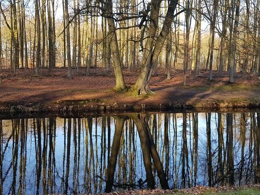 Bomen en vijver op landgoed Groeneveld tijdens een NS-wandeling Landgoed Groeneveld van Baarn naar Hilversum