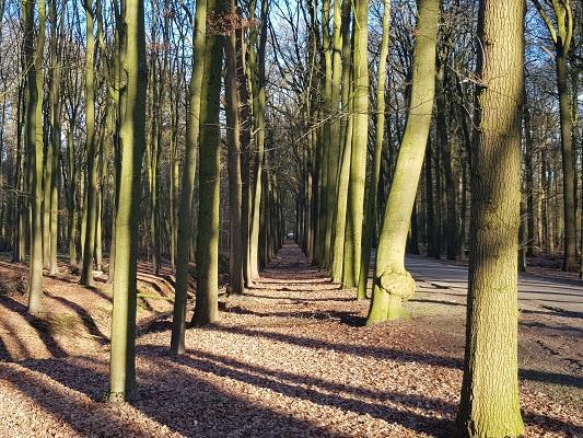 Baarnse Bossen tijdens een NS-wandeling Landgoed Groeneveld van Baarn naar Hilversum