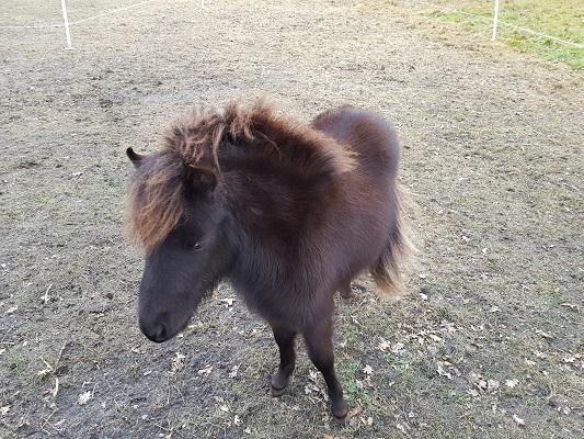 Pony tijdens een ommetje Vorstenbosch, mijn geboorteplaats.