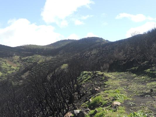 Wandeling op Canarisch Eiland La Gomera van Nationaal Park Garajonay naar Chipude bij brandresten brand 2012