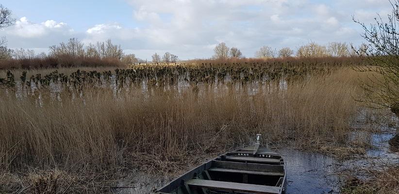 Wandelen over het vernieuwede Waterliniepad door de Noordwaard polder bij knotwillgen bij Pannekoek