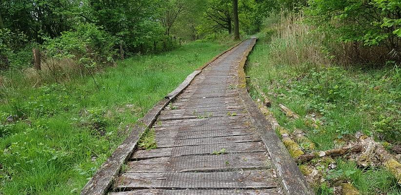 Wandelen over het Peelpad van Altweerderheide naar Stramproy over een vlonderpad in natuurgebied Kempen-Broek