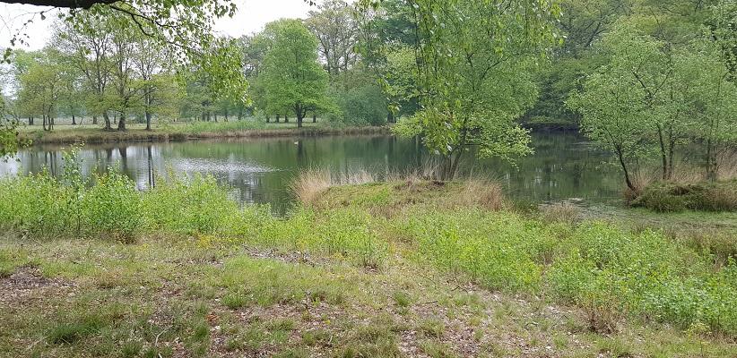 Wandelen over het Peelpad van Altweerderheide naar Stramproy