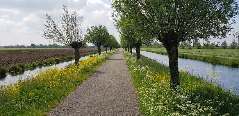 Wandelen over het Romeinse Limespad van Driebruggen naar Woerden langs knotwilgen