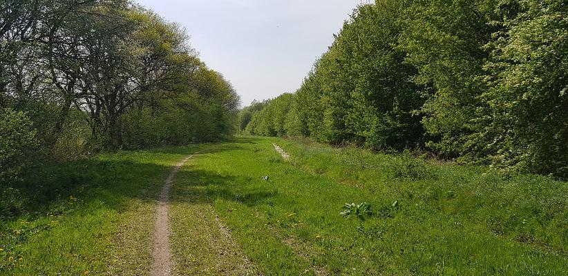 Wandelen langs het Westerborkpad richting Oude Diep