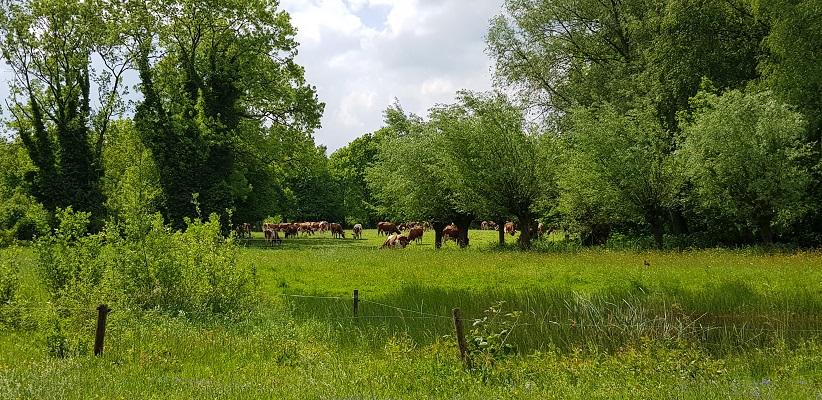 Wandeling van Gegarandeerd Onregelmatig over het Parkstadpad van Wandelen buiten de binnenstad van EIndhoven in het Genneper park