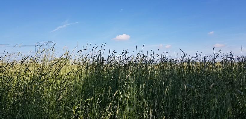 Wandeling over het Dommelpad in Eindhoven