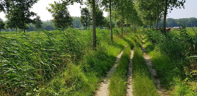 Wandeling over een trage tocht door het Dommedal bij Liempde