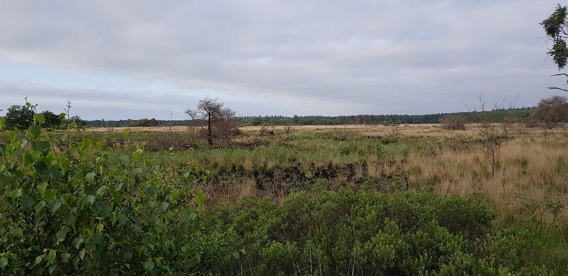 Wandeling over het Airbornepad van Kempervennen naar Genneper Park in EIndhoven bij de Malpie