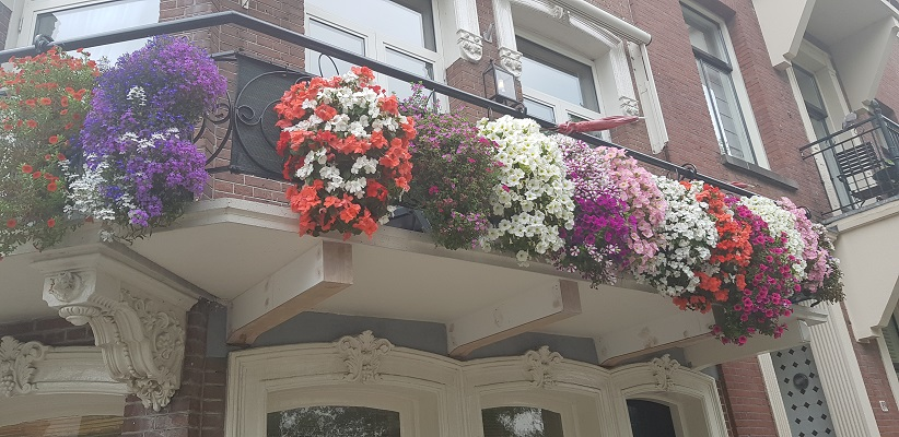 Wandelen buiten de binnenstad van Amsterdam van Gegarandeerd Onregelmatig in de Transvaalbuurt