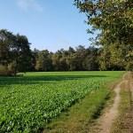 Landgoed Geijsteren op NS-wandeling Landgoed Geijsteren