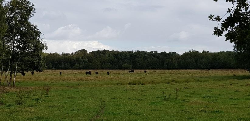 Wandeling over het Roots Natuurpad van Oisterwijk in de Mortelen