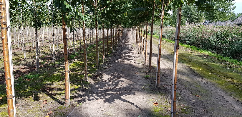 Wandeling over het Roots Natuurpad van Oisterwijk in Liempde