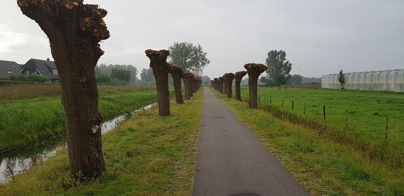 Wandelen buiten de binnenstad van Arnhem van Gegarandeerd Onregelmatig over het Vinexpad langs knotwilgen