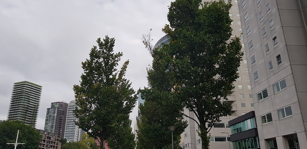 Bomen tijdens wandeling Creative Crosswalks Rotterdam