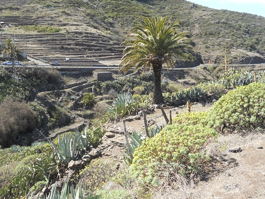 Wandeling van Chipude naar Imada op Canarisch Eiland La Gomera
