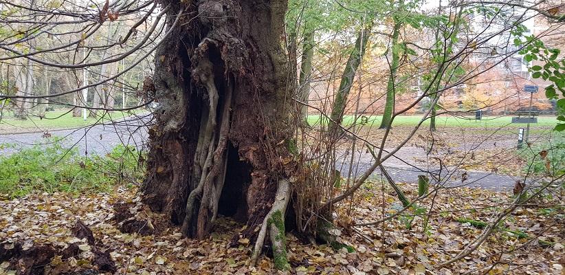 Wandeling over Klompenpad het Dorenweertsepad bij de Kapelleboom