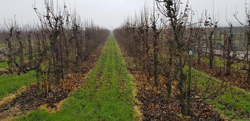 Wandeling over Klompenpad Rhenoijsepad langs boomgaarden bij Acquoy