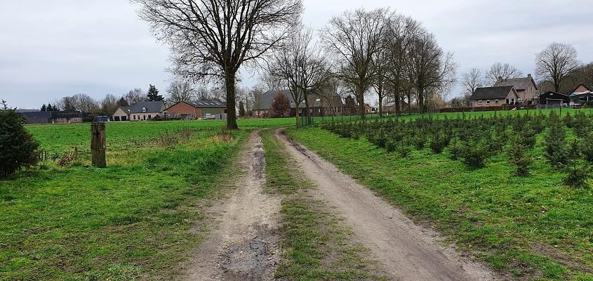 Wandeling over de mooiste zandwegen van Uden bij de Schadronstraat in Volkel